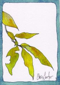 Nibbled Leaf